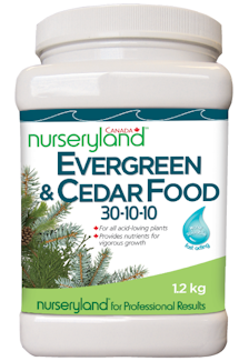 EvergreenCedar1.2MkUp-0001.png
